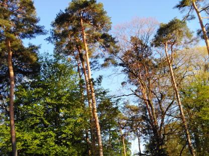 Nordstadtbäume
